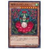 椿姫ティタニアル